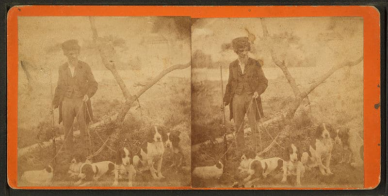Stereoaufnahme Ende 1900: Man with six beagles and a rifle in his hand. 1865-1920
