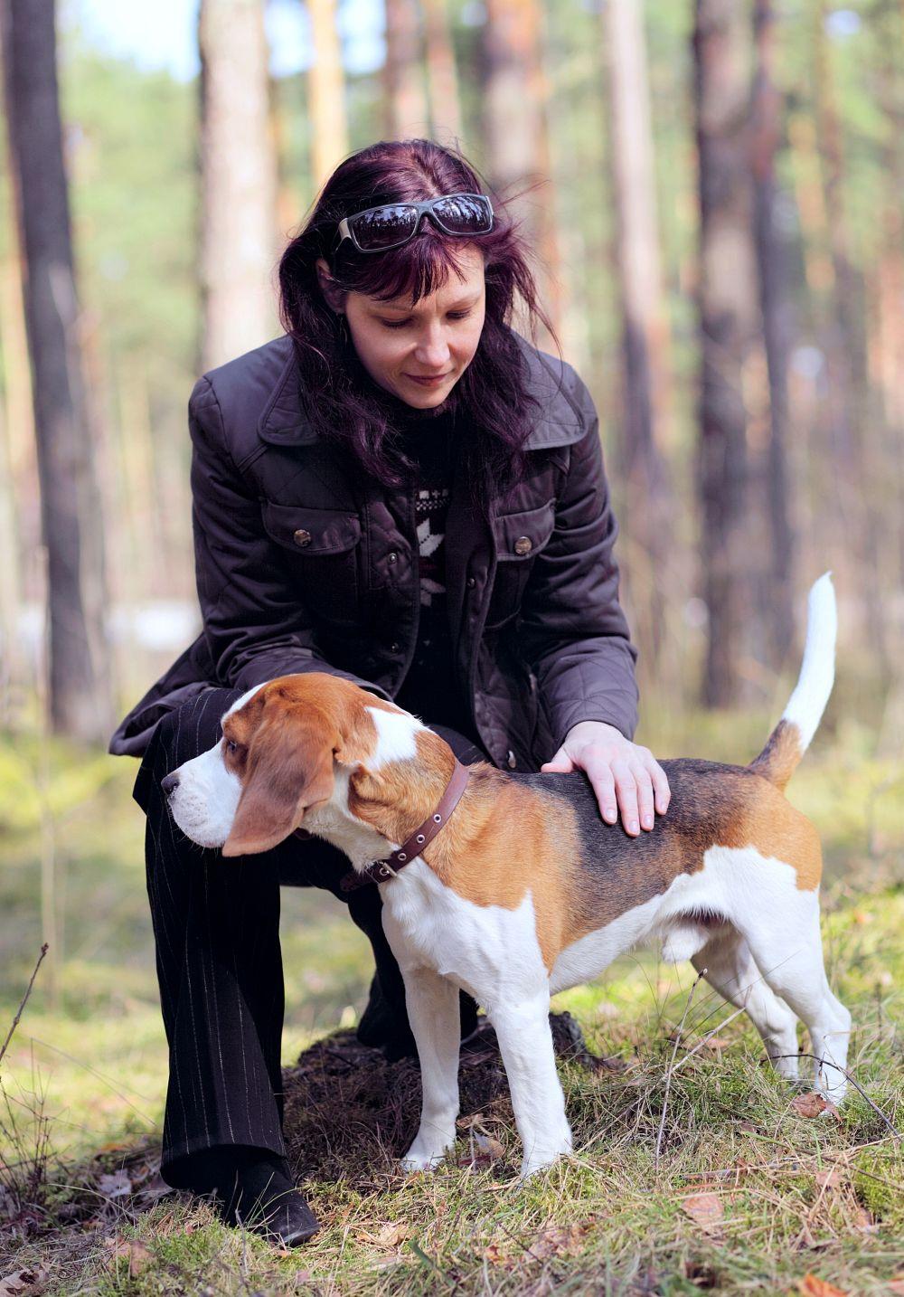 Beagle Deckrüde