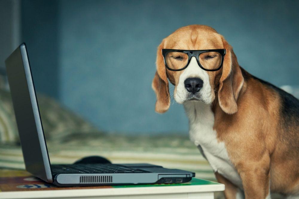 Beagleforum - Beagle Forum