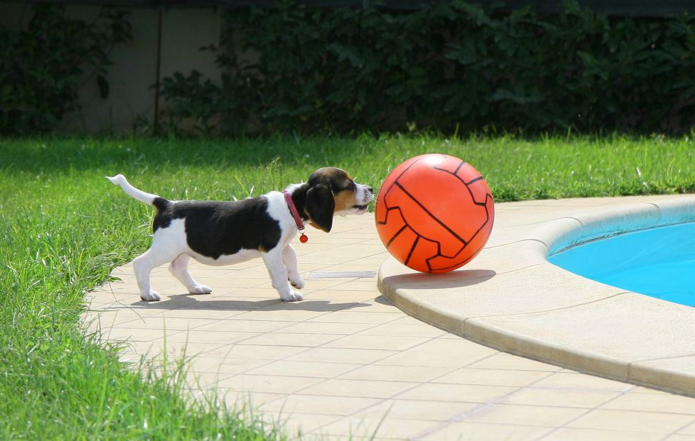 Flugreisen mit Beagle
