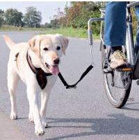 Beagle am Fahrrad