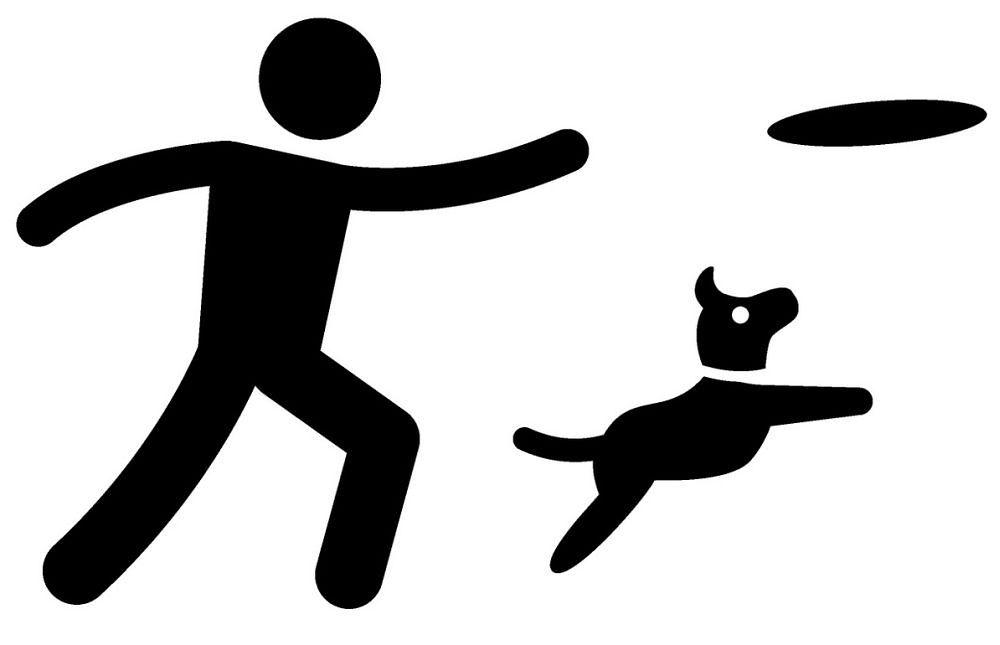 beagle beschäftigen frisbee