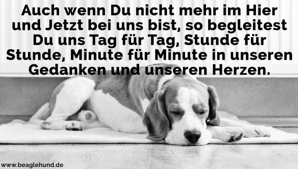 Ein Beagle auf dem Fußboden schläft