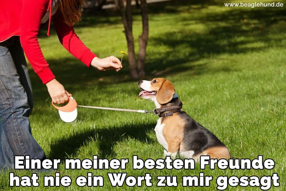 Ein Erwachsener füttern Ihre Beagle