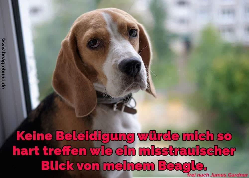Ein Beagle im Fenster