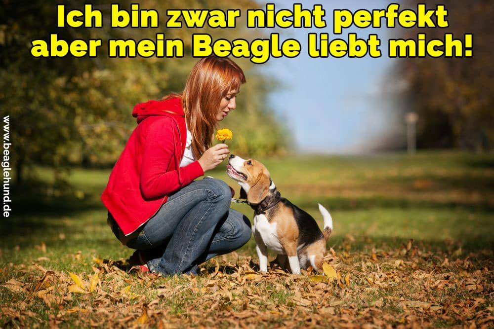 Eine junge Frau gibt eine Blume an seine Beagle