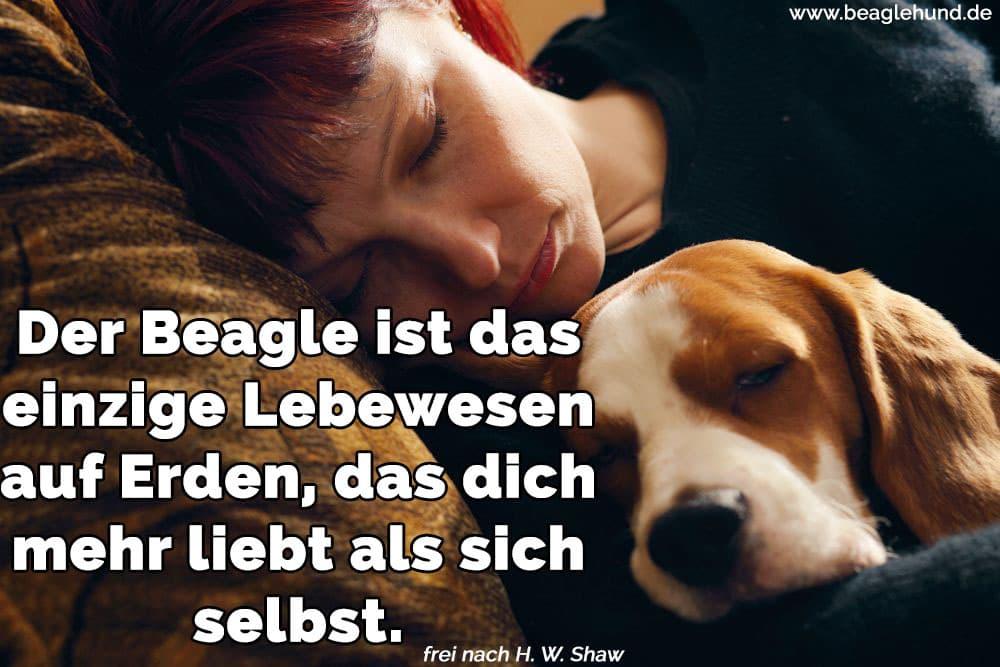 Eine Frau schläft mit ihrem Beagle