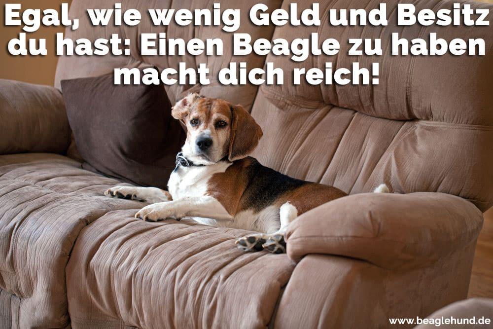 Ein Beagle auf dem Sofa sitzt