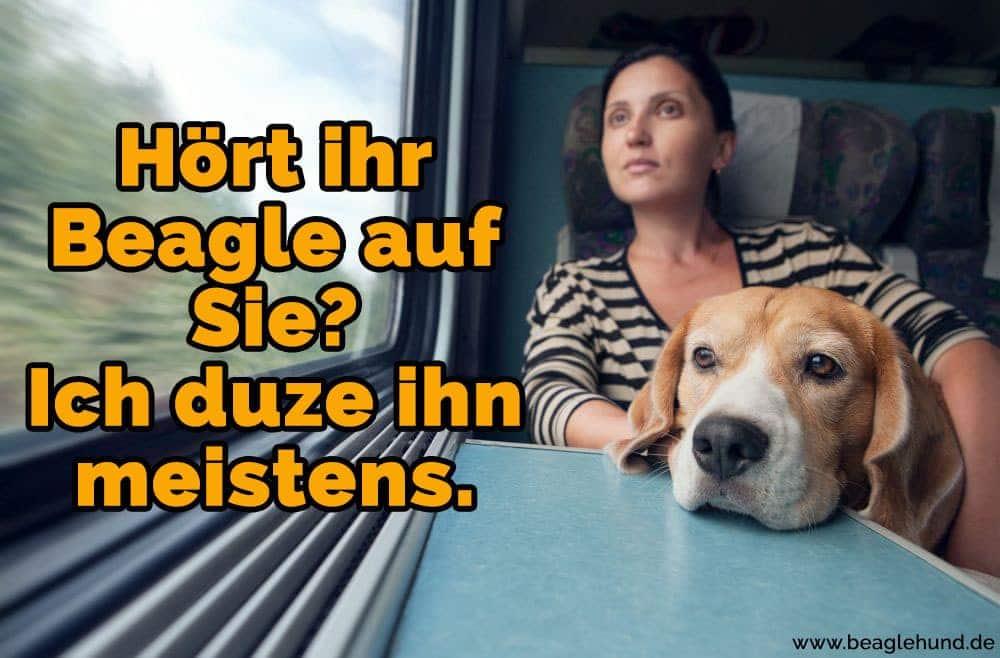 Eine Frau und ihr Beagle auf dem Zuge