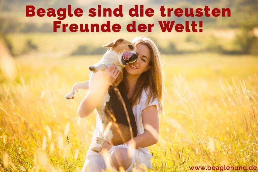 Eine Frau hält Ihre Beagle in Feld