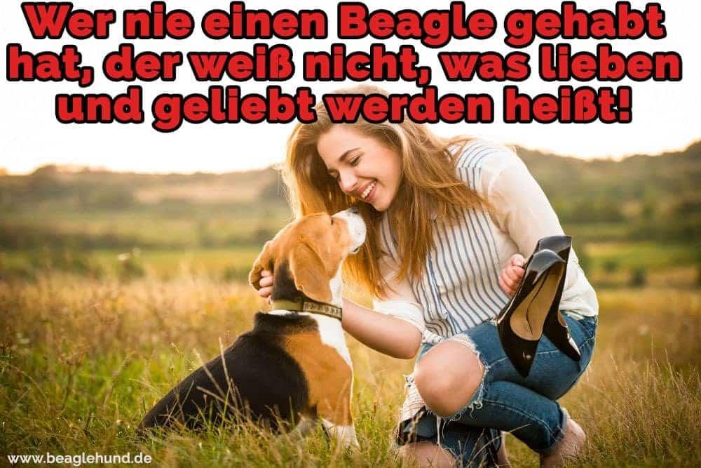 Ein Mädchen streichelt Beagle in Feld
