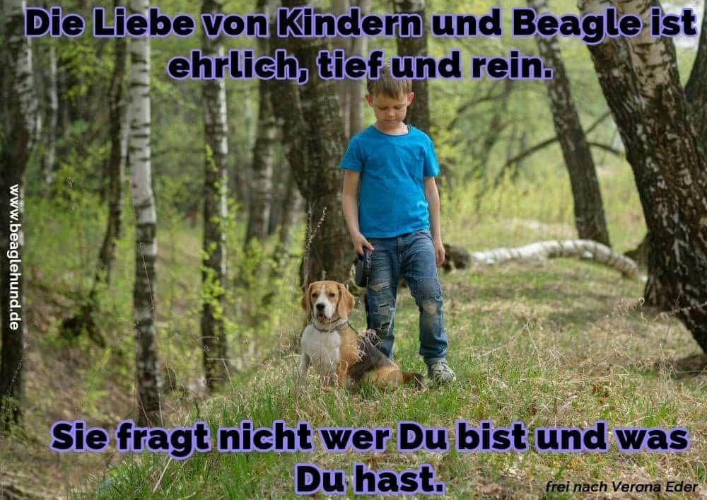 Ein Junge und seine Beagle im Wald