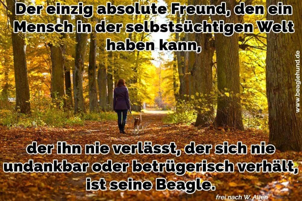 Eine junge Frau geht mit seinem Beagle im Wald