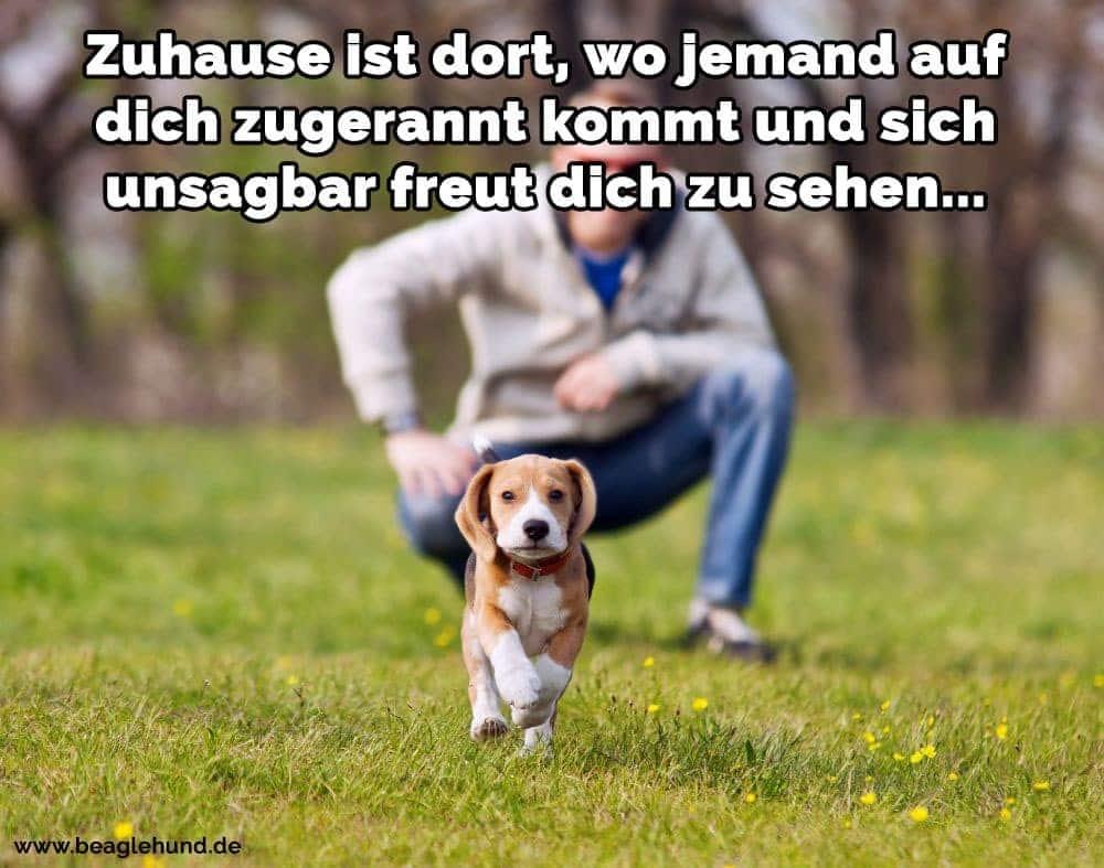 Ein Mann mit seinem Beagle-Welpen in den Park