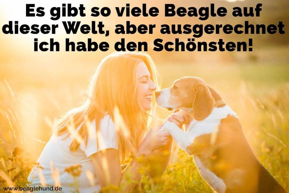 Eine Frau mit ihrem Beagle in Feld