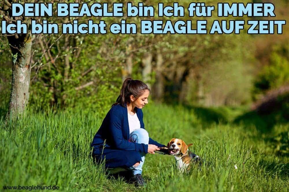 Eine Frau streichelt ihren Beagle auf Rasen