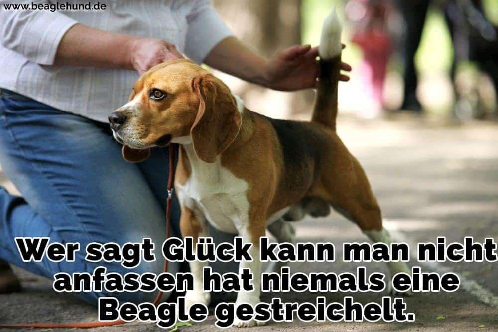 Ein Mann streichelt ihren Beagle