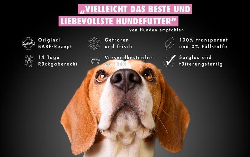 Barfen Beagle