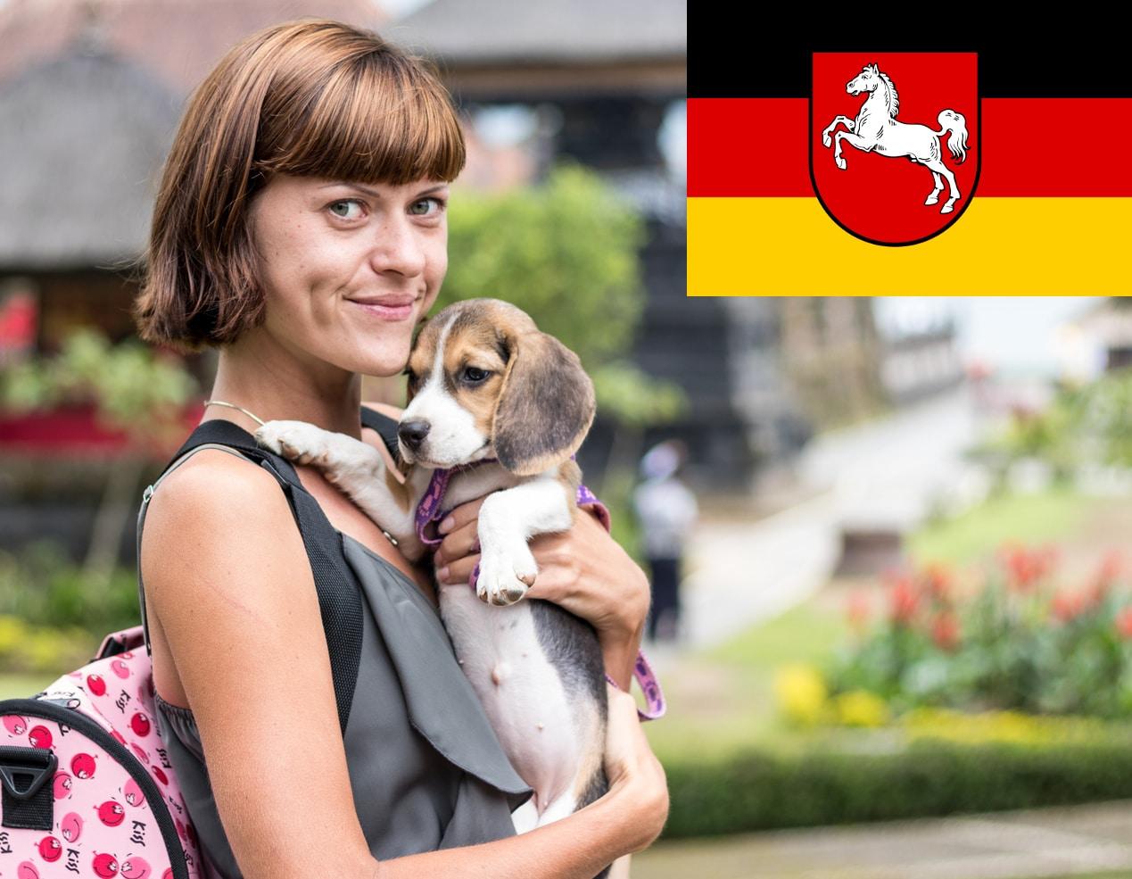 Beagle Welpen in Niedersachsen