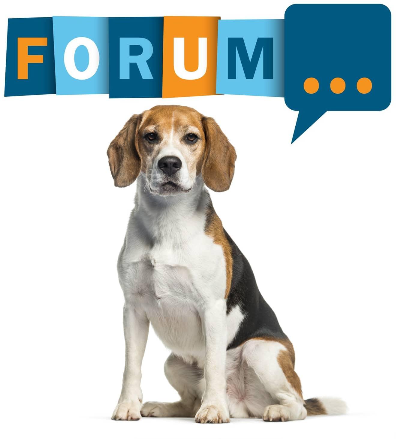 Beagle Forum - Fragen und Antworten zum Beagle